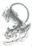 Pizzilli > Tigre Grafite
